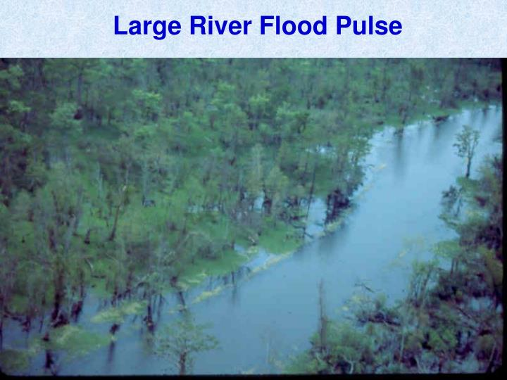 Large River Flood Pulse