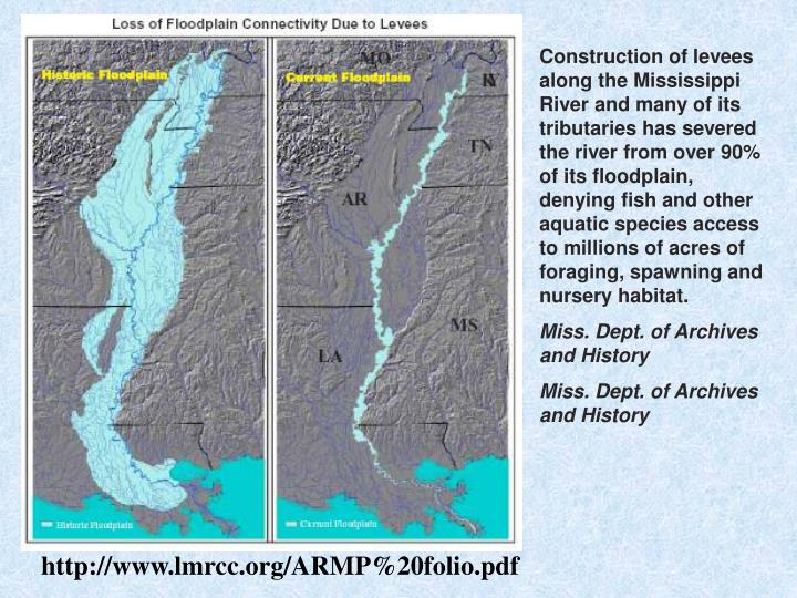 Construction of levees along the Mississippi River and many of its tributaries has severed the river from over 90% of its floodplain, denying fish and other aquatic species access to millions of acres of foraging, spawning and nursery habitat.