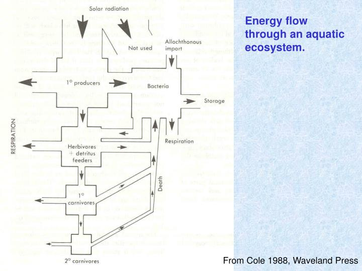 Energy flow through an aquatic ecosystem.