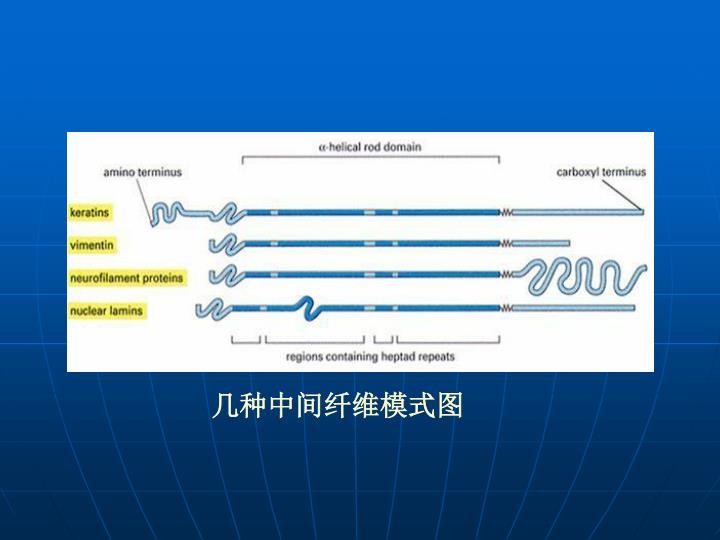 几种中间纤维模式图