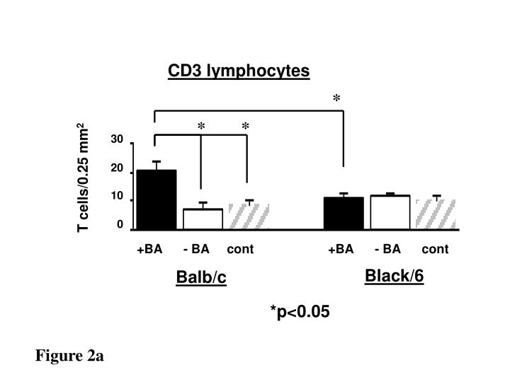 CD3 lymphocytes