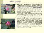4 the caspian lotus