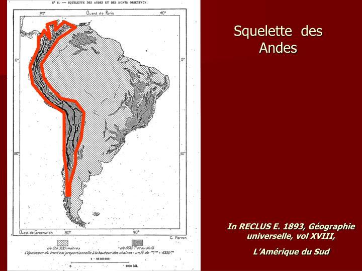 Squelette  des Andes