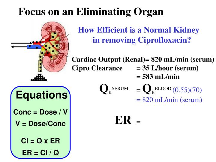 Focus on an Eliminating Organ