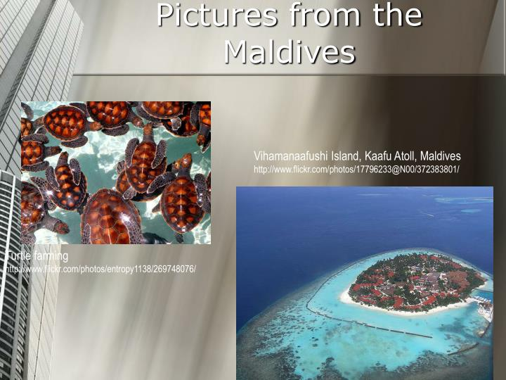 Pictures from the Maldives
