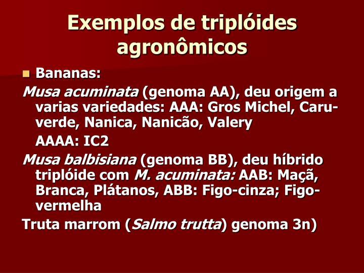 Exemplos de triplóides agronômicos