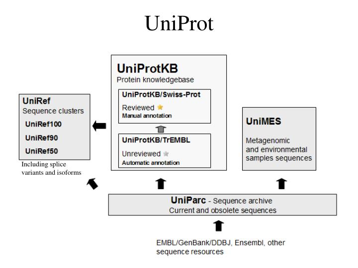 UniProt