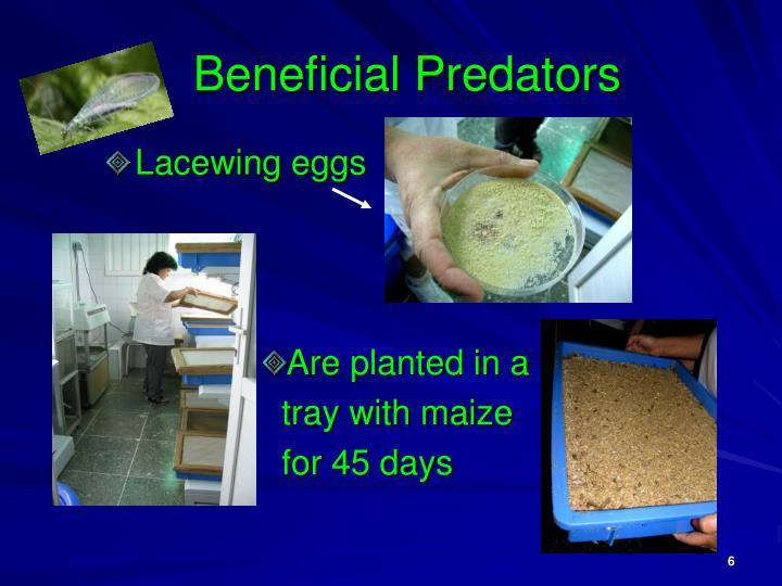 Beneficial Predators