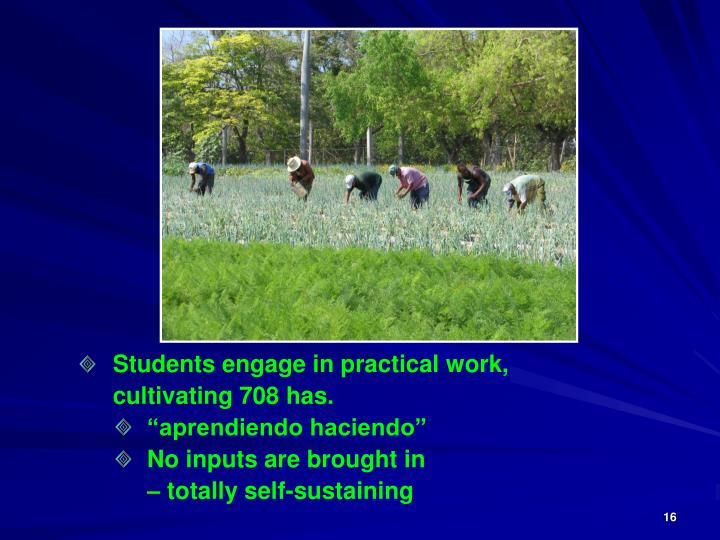 Students engage in practical work,