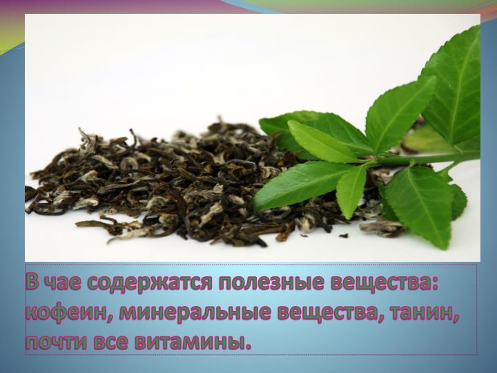 В чае содержатся полезные вещества: кофеин, минеральные вещества, танин, почти все витамины.