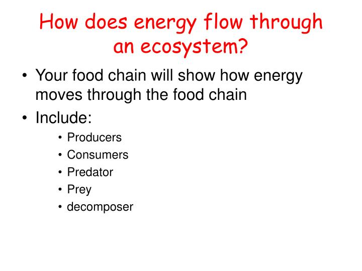 How does energy flow through