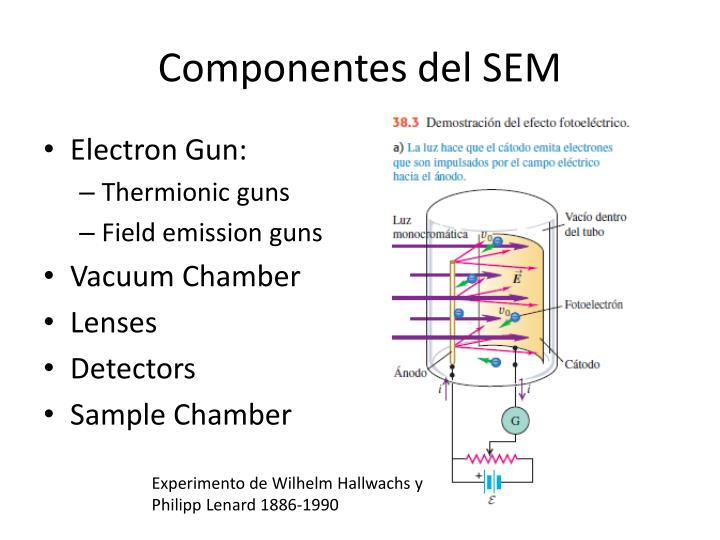 Componentes del SEM