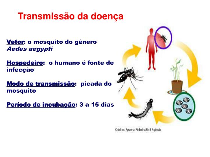 Transmissão da doença