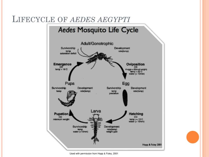 Lifecycle of