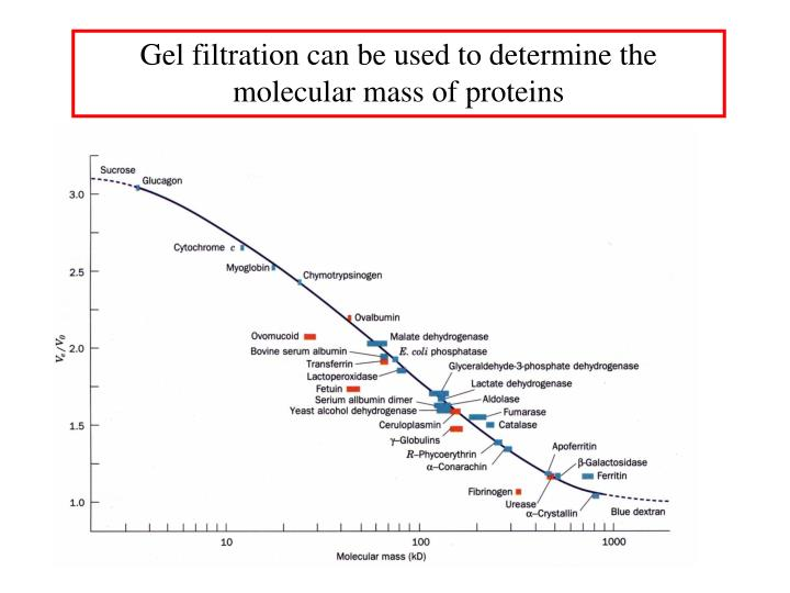Gel filtration can be used to determine the molecular mass of proteins