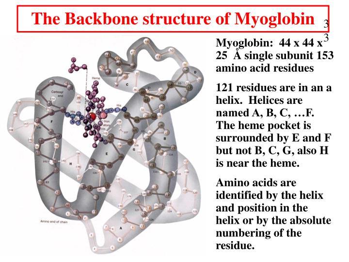 The Backbone structure of Myoglobin