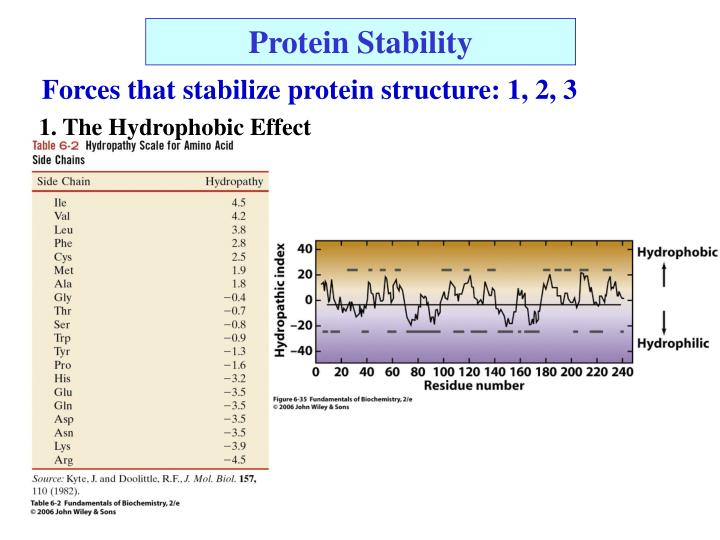 Protein Stability