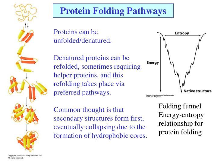 Protein Folding Pathways
