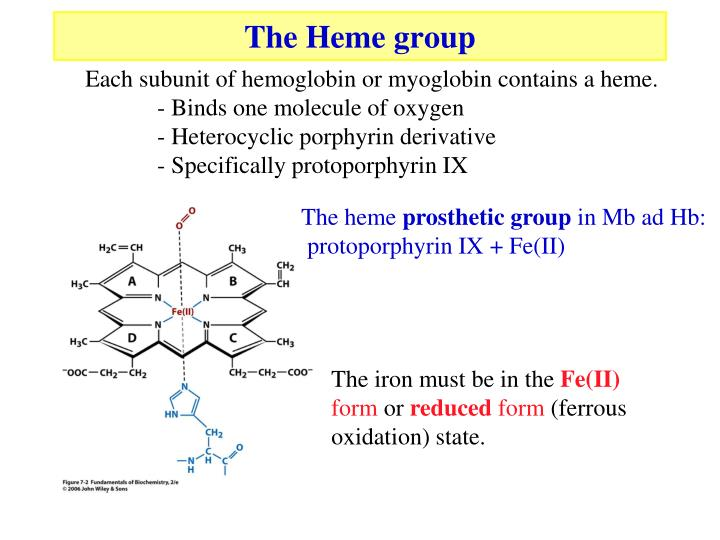The Heme group