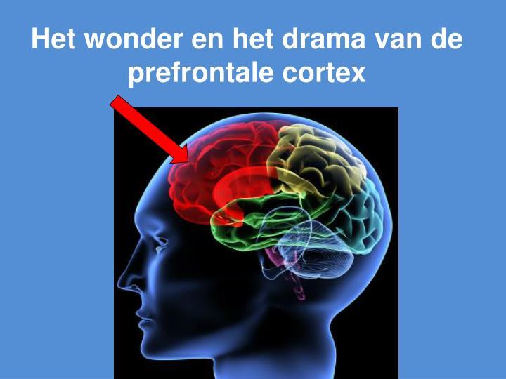 Het wonder en het drama van de prefrontale cortex