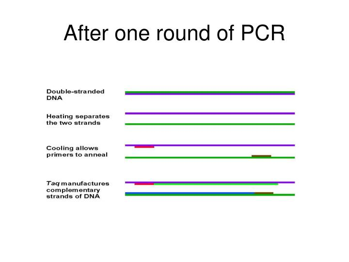 After one round of PCR