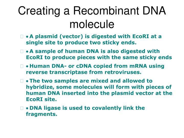 Creating a Recombinant DNA molecule
