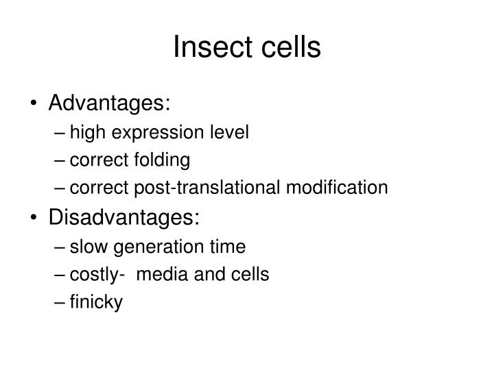 Insect cells