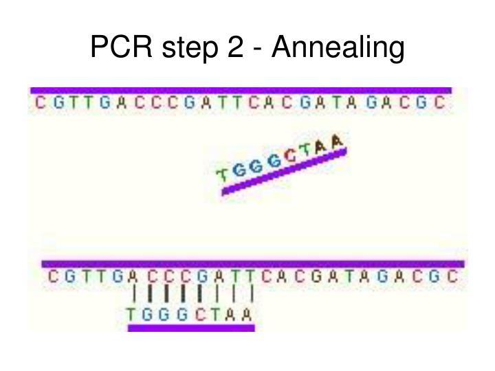 PCR step 2 - Annealing