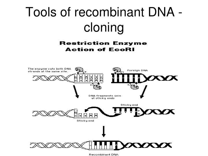 Tools of recombinant DNA - cloning