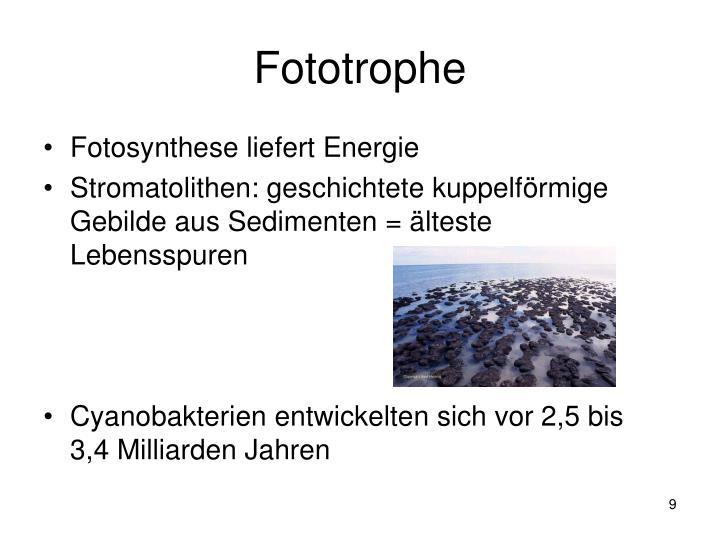Fototrophe