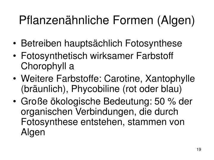 Pflanzenähnliche Formen (Algen)