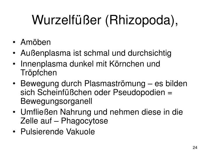 Wurzelfüßer (Rhizopoda),