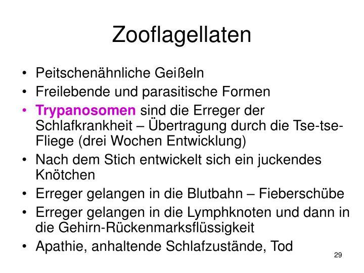 Zooflagellaten