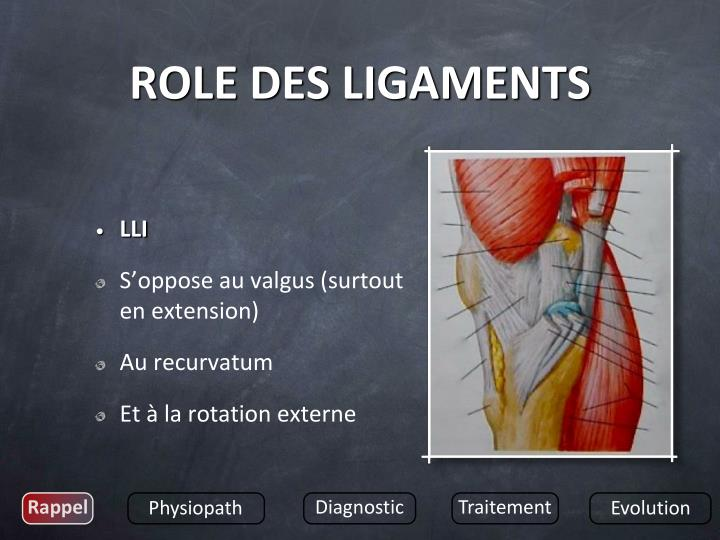 ROLE DES LIGAMENTS
