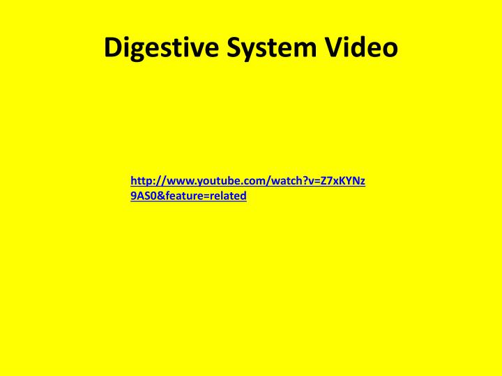 Digestive System Video