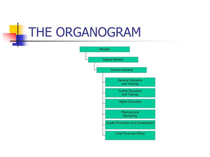 THE ORGANOGRAM