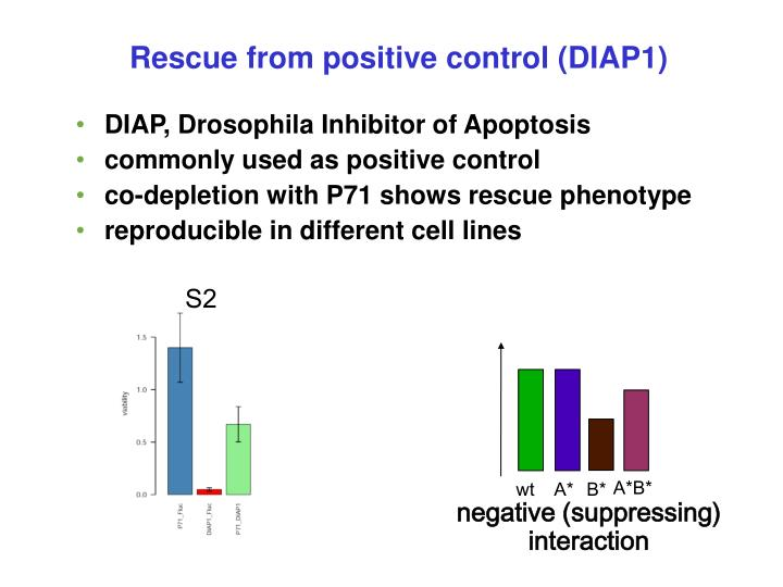 Rescue from positive control (DIAP1)‏