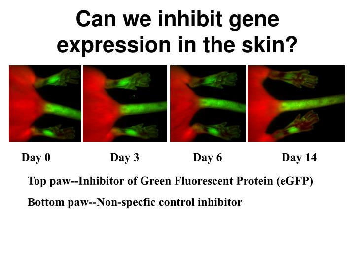 Can we inhibit gene expression in the skin?