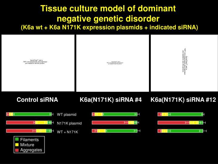 K6a(N171K) siRNA #4