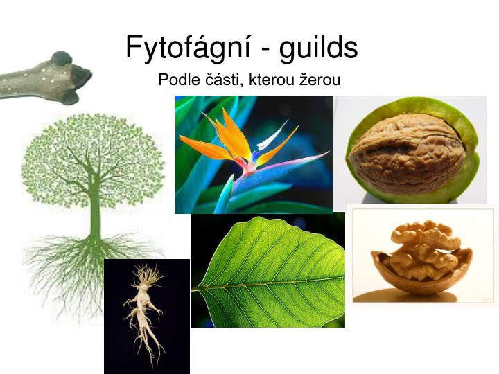 Fytofágní - guilds