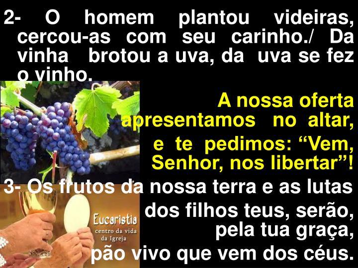 2- O homem plantou videiras,  cercou-as com seu carinho./ Da vinha   brotou a uva, da  uva se fez o vinho.