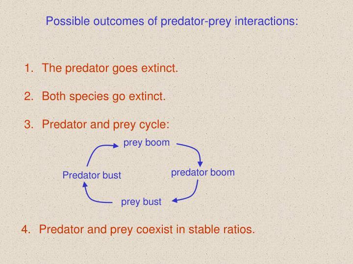 prey boom
