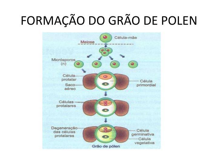 FORMAÇÃO DO GRÃO DE POLEN
