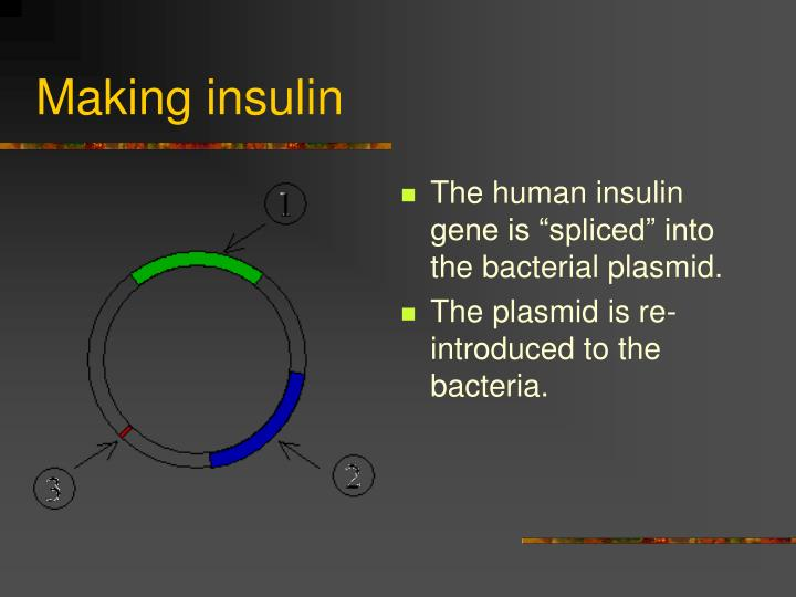 Making insulin