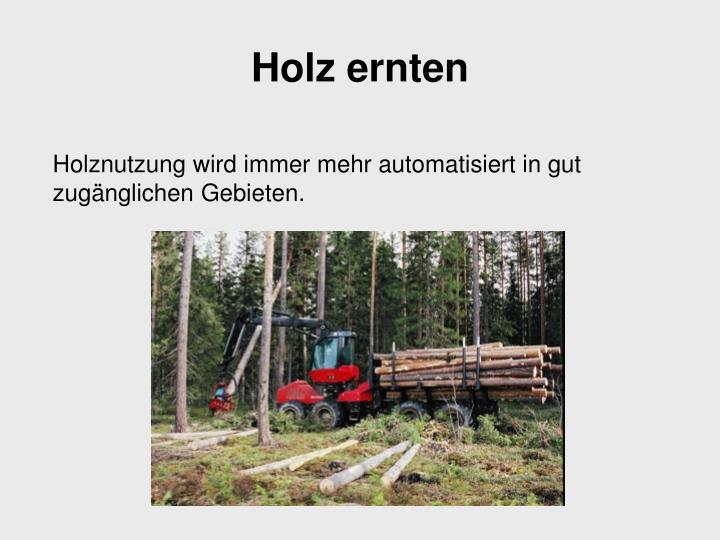 Holz ernten