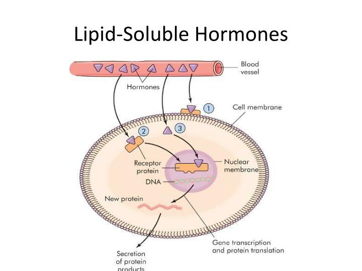 Lipid-Soluble Hormones