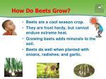 how do beets grow