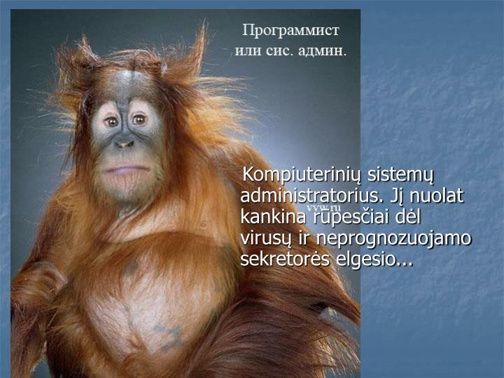 Kompiuterinių sistemų administratorius. Jį nuolat kankina rūpesčiai dėl virusų ir neprognozuojamo sekretorės elgesio...