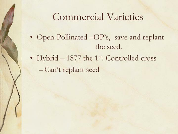 Commercial Varieties