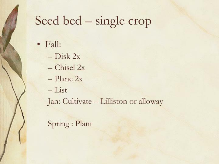 Seed bed – single crop